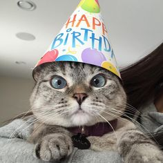 Ideas funny happy birthday cat pictures for 2019 Happy Birthday Animals, Funny Happy Birthday Pictures, Happy Birthday Funny, Happy Birthday Quotes, Cat Birthday, Animal Birthday, Happy Birthday Wishes, Birthday Greetings, Happy Birthday With Cats