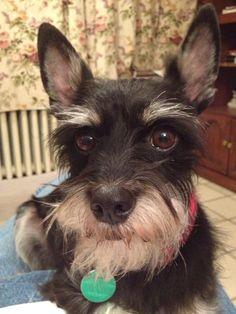 Looks so much like my doggie Winston!