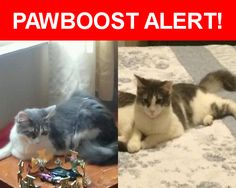 Please spread the word! Blue was last seen in Chicago, IL 60651.    Nearest Address: Near W Lemoyne St & N Springfield Ave