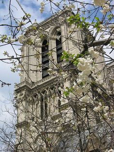 Notre Dame tower in April, Paris France