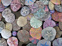 Rachel Gourley's Polymer Clay Sand Dollars... Rachel brings a delightful sense of humor and curiosity about the natural world to all her polymer clay work.