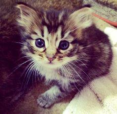 Little Kitten cute cats