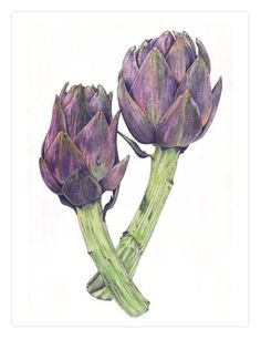 59 Ideas For Fruit Drawing Pencil Beautiful Botanical Illustration, Botanical Prints, Flower Images, Flower Art, Painting & Drawing, Watercolor Paintings, Watercolor Fruit, Watercolour, Spice Garden