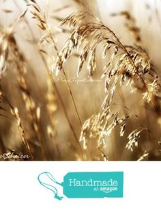 Illumined / Graceful Stems of Wild Meadow Grass Glowing in Sunlight / Fine Art Photography Print from PhotoClique https://www.amazon.com/dp/B01NAIJRQZ/ref=hnd_sw_r_pi_dp_oa3tybR60PQEH #handmadeatamazon