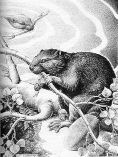 animals of the bible illustrated dorothy p lathrop Animal Drawings, Art Drawings, Drawing Animals, Otter, Fur Trade, Wood Burning Art, Illustration Sketches, Cute Funny Animals, Pattern Drawing