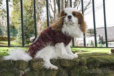 Occorrente: 100 gr di Malabrigo Silky merino ferri 3,5 poca lana di colore…