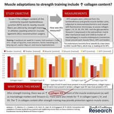 When thinking about the adaptations to strength training most strength coaches focus on 1 hypertrophy and 2 neural drive.  However strength training produces many other important changes.  These changes include alterations in central factors such as inter-muscular coordination.  Strength training also changes peripheral factors such as muscle fascicle length pennation angle regional hypertrophy muscle fiber type muscle and tendon stiffness and the the collagen content of the extracellular…