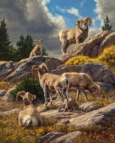 """Trailside Galleries is pleased to announce """"Dustin Van Wechel: Quiet Observations,"""" a show of all new works by the multiple-award-winning wildlife painter. Oil Painters, Wildlife Art, Western Art, Art Auction, American Artists, Cute Animals, Fine Art, Wild Things, Big Game"""