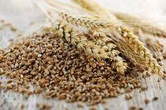 VIVERE IN SALUTE: i cereali alternativi per la dieta