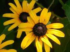12 FLOWERS TO GROW IN A DROUGHT - http://www.gardenpicsandtips.com/12-flowers-to-grow-in-a-drought/