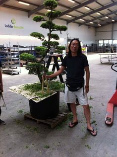 We take care of your bonsai tree's, big and small