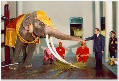 Forever my King King Phumipol, King Rama 9, King Of Kings, King Queen, Thailand History, King Thailand, Queen Sirikit, King Photo, Bhumibol Adulyadej