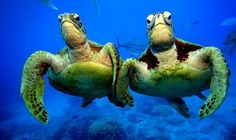 A couple of turtles
