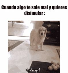 Funny Animal Pictures, Funny Photos, Funny Images, Animals And Pets, Funny Animals, Cute Animals, Funny Jokes, Hilarious, Funny Cute