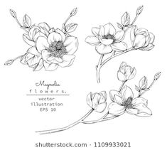 Magnolia flowers with line art on white background. Art Floral, Floral Drawing, Illustration Botanique, Illustration Blume, Anemone Flower, Flower Art, Flower Tattoos, Small Tattoos, Flower Line Drawings