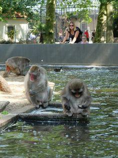 Chloé et Clem admirent les singes (Artis Zoo / Amsterdam / Pays-Bas)
