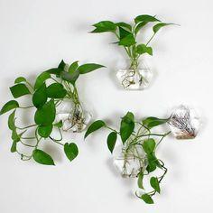 Set of 4 single hexagon wall terrarium// wall hanging green plants vase// indoor planters// green plant wall planter de NewDreamWorld en Etsy https://www.etsy.com/es/listing/250856352/set-of-4-single-hexagon-wall-terrarium