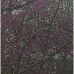 Rainy Day Spring