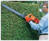 Tips for pruning your hedges to keep them controlled, neat and tidy.