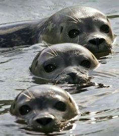 Baby sea lions