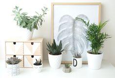 Meine Plant Gang wächst und wächst