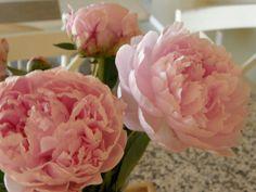 pretty pink peonies