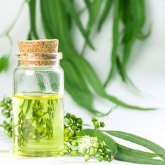 Eucalyptus essential oils in glass bottle ,oganic herbal aromatherapy concept , L Eucalyptus, Eucalyptus Essential Oil, Essential Oils, Glass Bottles, Glass Vase, Superfoods, Aromatherapy, Roots, Herbalism