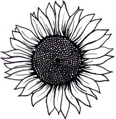 sunflower in garden line drawing - Google Search