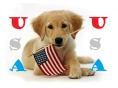 Shop Golden Puppy and American Flag Invitation created by khpstore. Personalize it with photos & text or purchase as is! Puppy Pictures, Dog Photos, Puppy Pics, Cover Photos, Family Photos, Cute Puppies, Cute Dogs, Puppies Puppies, Teacup Puppies