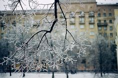 wintery branches