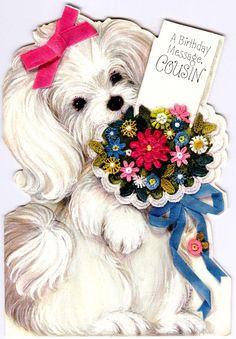 #Birthday #greeting #dog #cute #cousin #Ambassador