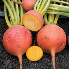 Know Before You Grow: Root Crops
