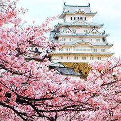 【setemaresturismo】さんのInstagramをピンしています。 《#Kyoto: o novo top destino para viajar! Viajar e fotografar são duas coisas que combinam muito.  Fotografias como essa servem não só como lembranças mas como inspirações…vamos conosco? #himejicastle  #cherryblossoms  Foto @rkallio89》