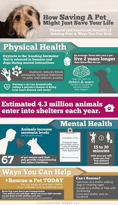 How Saving a Pet Might Just Save you. Got a bit teary with the last fact
