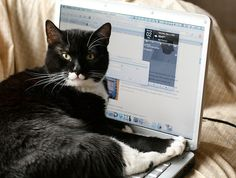 Laptop-top Cat, or Jester Meets Leopard by wabisabi2015, via Flickr