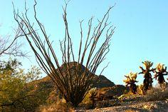 More amazing Sonoran Desert