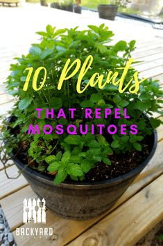 Best Mosquito Repellent: 10 Plants That Mosquitoes Hate - Backyardscape Simple plants that mosquitoes hate. We have several in our backyard. Mint is great for several things. Natural Mosquito Repellent Plants, Best Mosquito Repellent, Mosquito Repelling Plants, Container Gardening, Gardening Tips, Small Garden Landscape, Landscape Edging, Best Perennials, Flowers Perennials