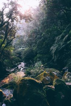 Magic Forest - On a day hike in a famous Yangmingshan park, a vast natural space where one can find a perfect spot for themselves.
