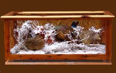 Male/Female Pheasants in coffee table Taxidermy Display, Bird Taxidermy, Pheasant Mounts, Hunting Bedroom, Trophy Display Case, Trophy Rooms, Fishing Stuff, Cabin Fever, Glass Table