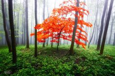 #orange #tree | Landscape Photography by Janek Sedlar