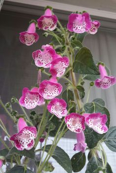 Beautiful, looks like a foxglove almost. Cactus Y Suculentas, Live Plants, House Plants, Orchids, African, Birds, Beautiful, Gardening, Gardens