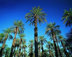 Online Buy Wholesale tropical landscapes from China tropical ...