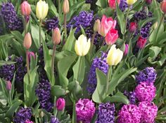 Free Pictures Spring Flowers | colorful spring garden - garden, flowers, hyacinths, colorful, nature ...