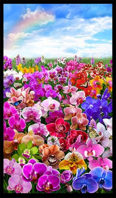 """Orchid Magic - Rainbow Meadow - 24"""" x 44"""" PANEL - DIGITAL PRINT - Quilt Fabrics from www.eQuilter.com"""