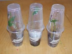 Greenhouse growing Cups