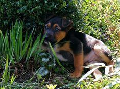 Kutyáknak/kutyákra mérgező növények - gazigazito.hu Dogs, Animals, Animais, Animales, Animaux, Doggies, Animal Books, Animal, Dog