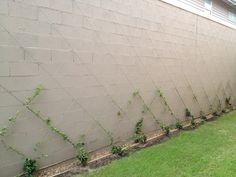 Exactly how I want to train vines for my front garden.  Need the handyman to build this... I don't have time!