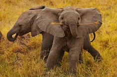 This happy baby elephant makes my heart sing.