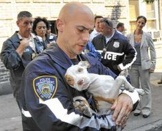 Police save 47 pit bulls from a windowless 'dungeon' in the Bronx.
