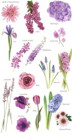 """Have you ever found a picture of a bouquet and wondered, """"What is that flower?"""" Here is a collection of flower names sorted by color. A few bouquet examples are at the bottom and some non-tradi. flowers bouquet pink roses Flower names by Color Purple Wedding Flowers, Colorful Flowers, Wedding Bouquets, Beautiful Flowers, Wedding Blue, Wedding Colors, Purple Bouquets, Types Of Purple Flowers, Bouquet Flowers"""